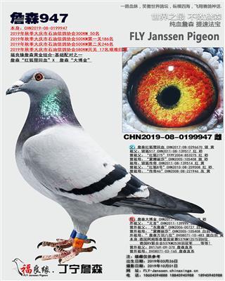 詹森947