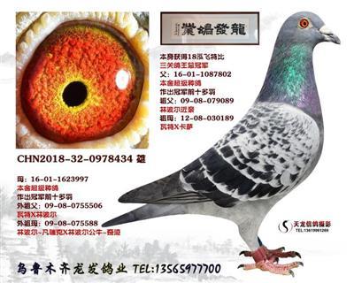 2018泓飞三关鸽王总冠军