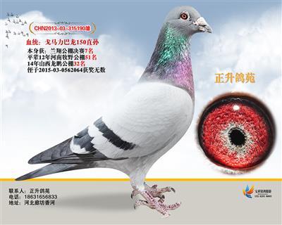 北京兰翔7名