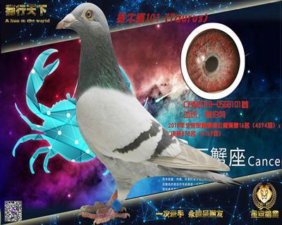 金牛座(贺伯特101)