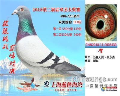 2018年蓝色海湾加站赛双关鸽王113名