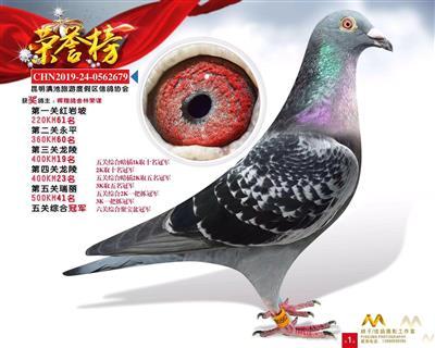 2019年五关综合冠军