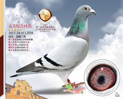2017五关综合11名