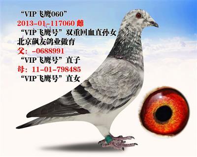 """VIP飞鹰060"""