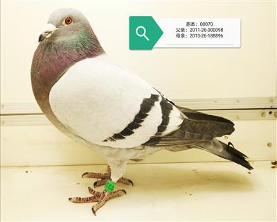 �光家�@胡本�U壹佰���282近�H直�O
