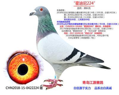 北京立新公棚决赛24名