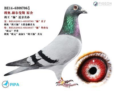 "利�W.原舍""�W元""平�直子/�罱�血直�O"