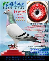 兄【斗士4444】