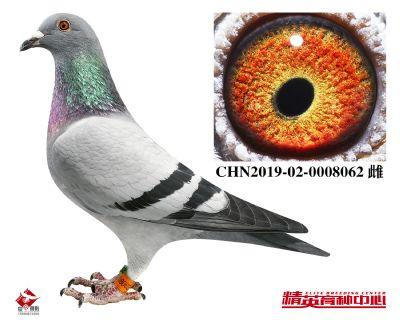 CHN2019-02-0008062