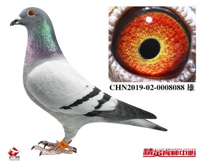 CHN2019-02-0008088