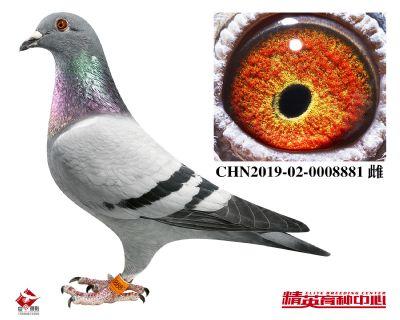 CHN2019-02-0008881