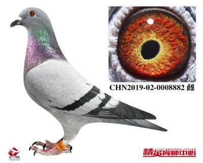 CHN2019-02-0008882