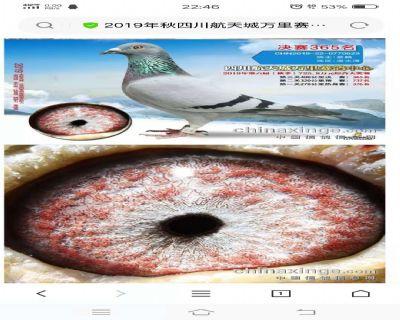 微信图片_20200330195809