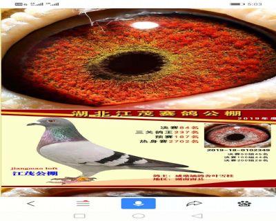微信图片_20200330195819