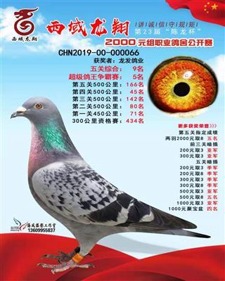鸽王9名2019西域龙翔
