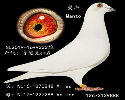 曼托(小白十二)