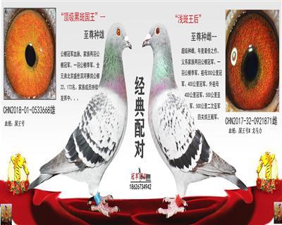 北京盛世滨河22名平辈X浅斑王后