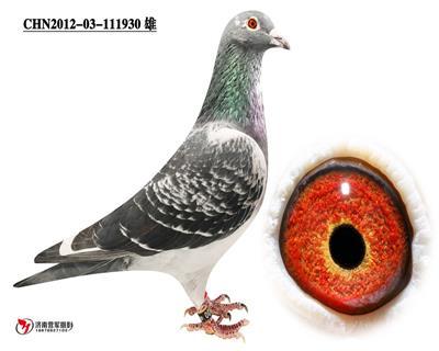 胡本930