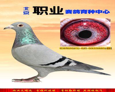 胡本885