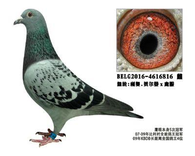 利奥Ⅹ鹰眼