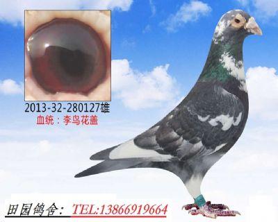 李鸟127