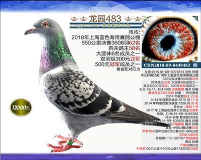 迎新年 精品种鸽 10