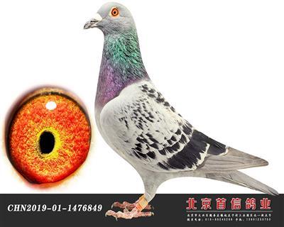 杨欧瓦克849
