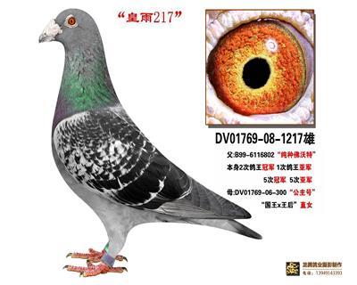 皇羽217
