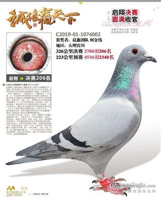 云南启翔决赛206名