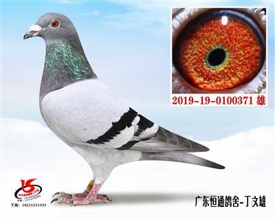 飞戈371