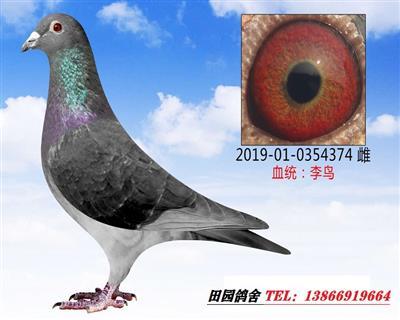李鸟374