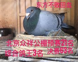 鸽王生活照