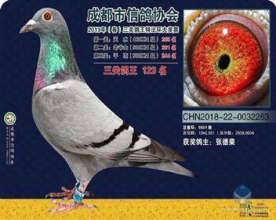 成都市信鸽协会三关鸽王123名