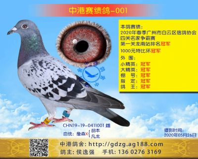 中港赛绩鸽-001