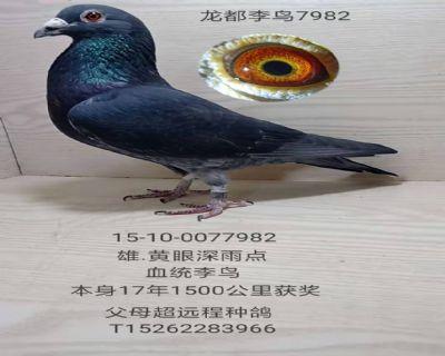 龙都李鸟7982