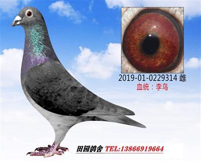 李鸟314
