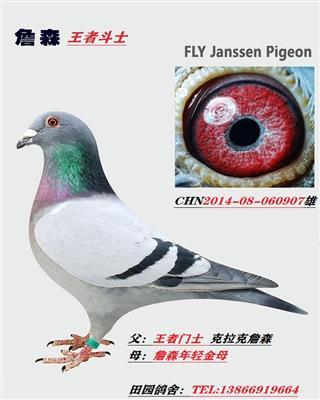 詹森907