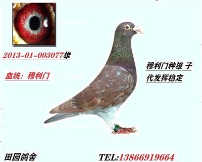 幕利门077