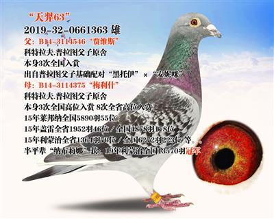 """""""天羿63"""""""