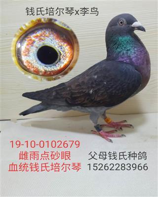 钱氏培尔琴x李鸟