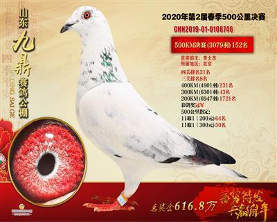 2020年山东九鼎公棚三关鸽王8名