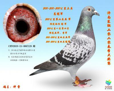 20春三关鸽王冠军