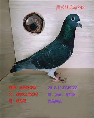 吴淞跃龙鸟288