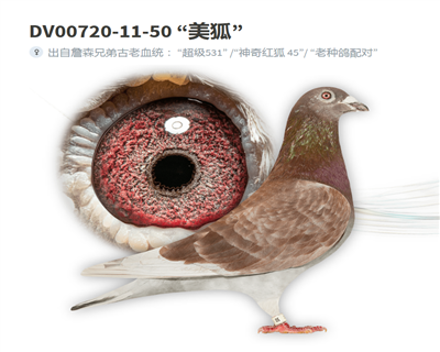 詹森红狐74冠军血系