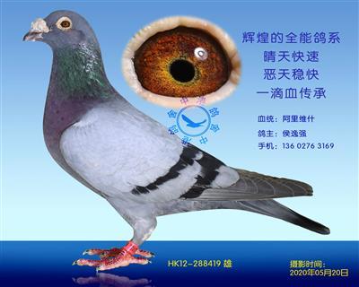 中港阿里-419