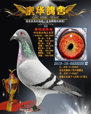 2019南通泰悦赛鸽俱乐部四关鸽王亚军
