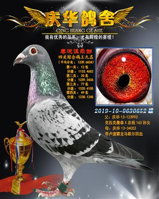 2019南通泰悦赛鸽俱乐部四关鸽王九名
