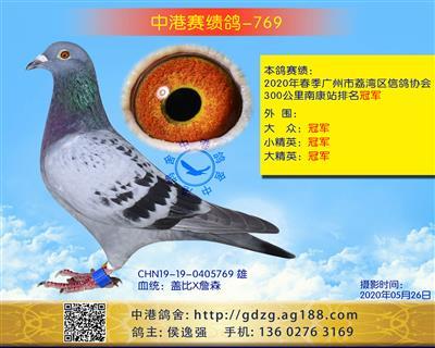 中港赛绩鸽-769