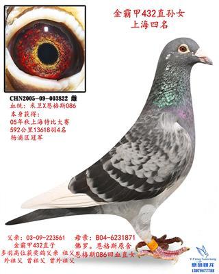 金霸甲上海13618羽特比4名杨浦区冠军