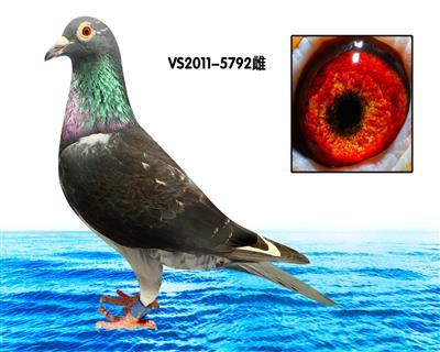 """索尼�""""黑斑白翅792�"""